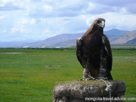 golden eagle west mongolia