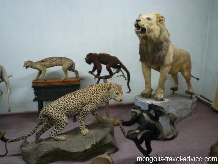 bogd khan museum ulan bator stuffed animals