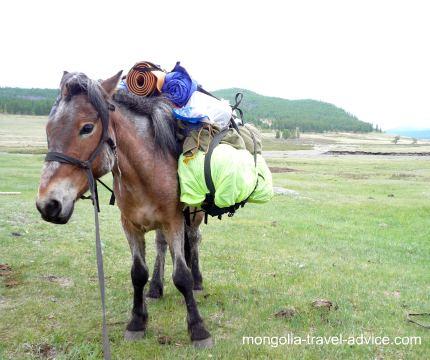 Mongolia horse trek pack horse
