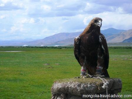 golden eagle west mongolia