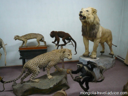 bogd khan museum ulan bator stuffed animals